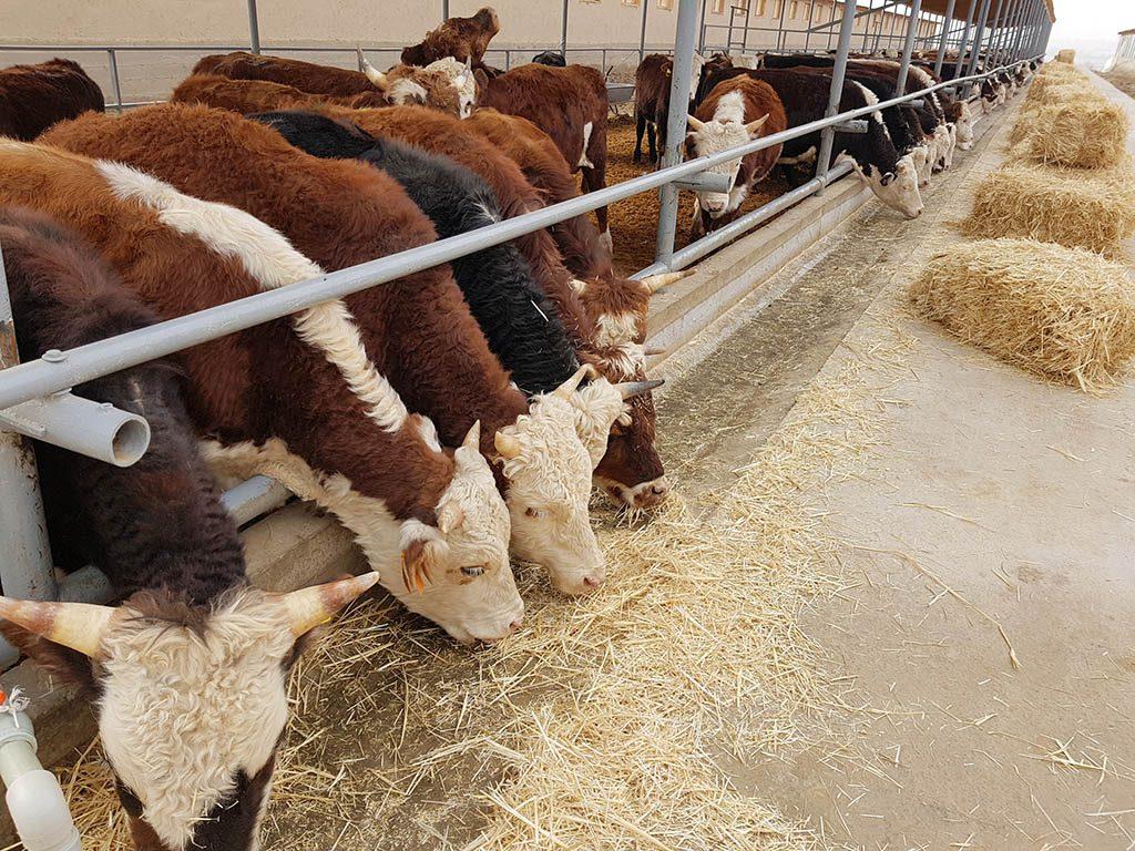 Бардак в Минсельхозе влияет на работу животноводов