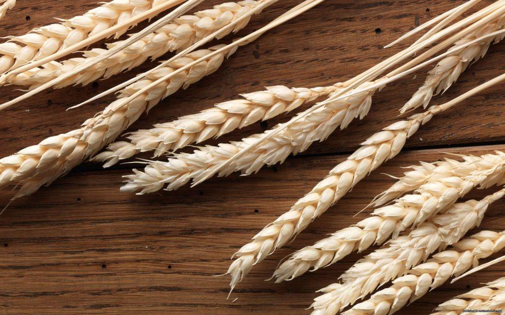 За 2 часть 2018-19 сезона срочный рынок пшеницы в США вырос, а в Европе провалился