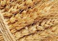 Прошлая неделя дала новое повышение котировкам пшеницы в США и Европе
