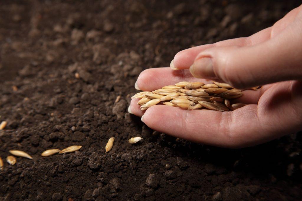 Казахстанские компании незаконно вывезли из Канады семена зерновых и бобовых