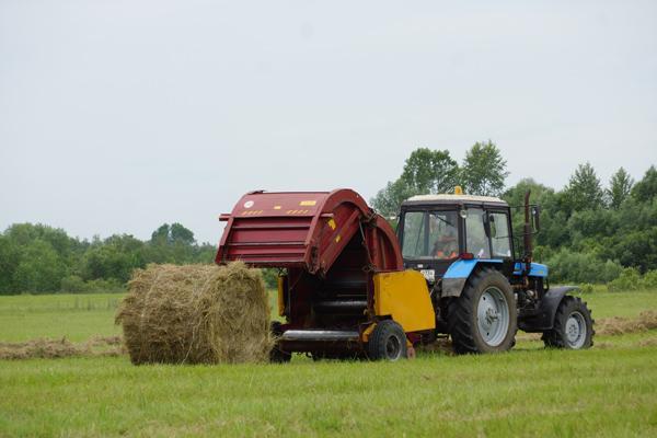 Почему дорожают корма: сено есть, а денег нет