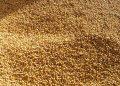 В США фьючерсы на зерно и сою выросли из-за роста экспорта и прогресса в сборе урожая