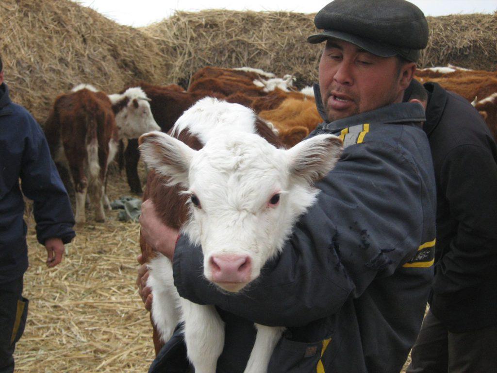 Импорт скота привел к ввозу болезней в Казахстан