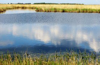 Пестицидами отравилась рыба в североказахстанском озере
