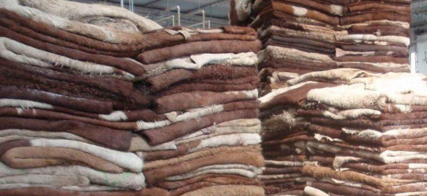 В Брянской области открылся высокотехнологичный кожевенный завод