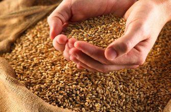 В Ростовской области нашли мешок с древним зерном