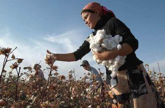 Гендерное неравенство в сельских районах  Восточной Европы и Центральной Азии
