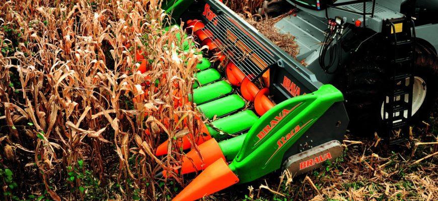 В Приморье стартовала уборочная кампания кукурузы