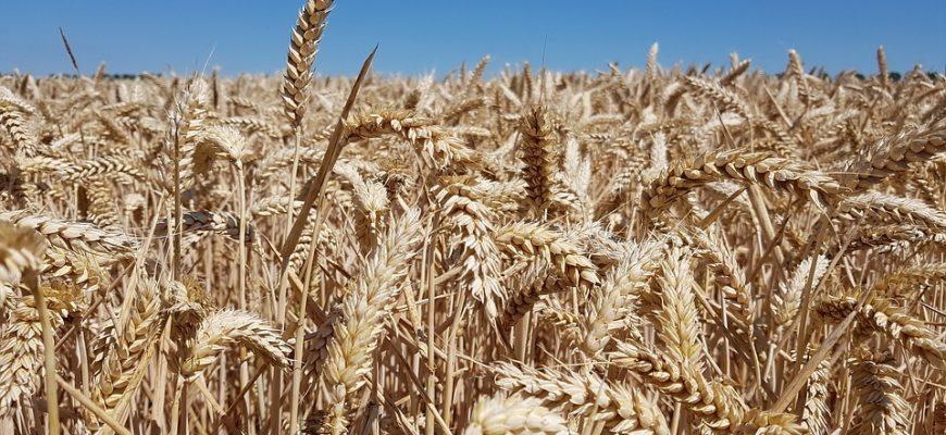 Где взять кредит на агробизнес в Казахстане