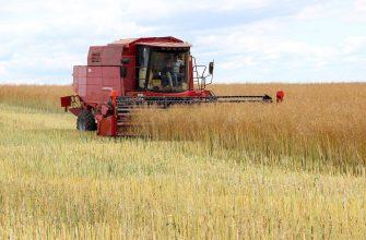В Восточном Казахстане убрано 10% масличных