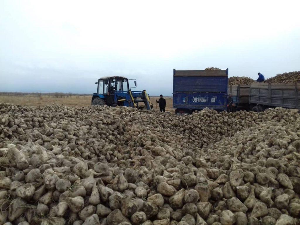 Казахстанский экспорт зерна становится все более незаметным среди акул этого бизнеса