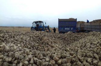 74% свекловичных полей убрано в Жамбылской области