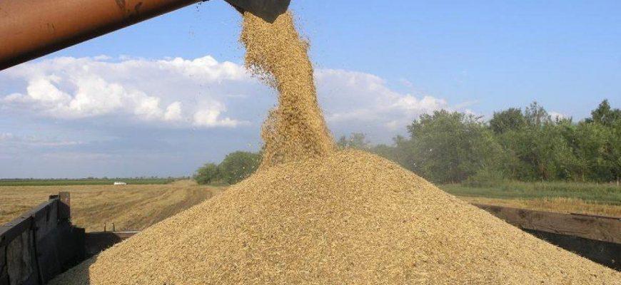 Планы государства спасет контрабандное зерно