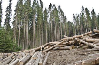 На Востоке нечем тушить лесные пожары, идет незаконная рубка