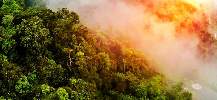 Леса Амазонии горели из-за вырубки деревьев
