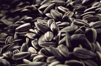 В Восточном Казахстане  работники украли  20 тонн семечек