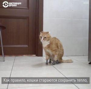 Основные причины упадка ветеринарии в Казахстане