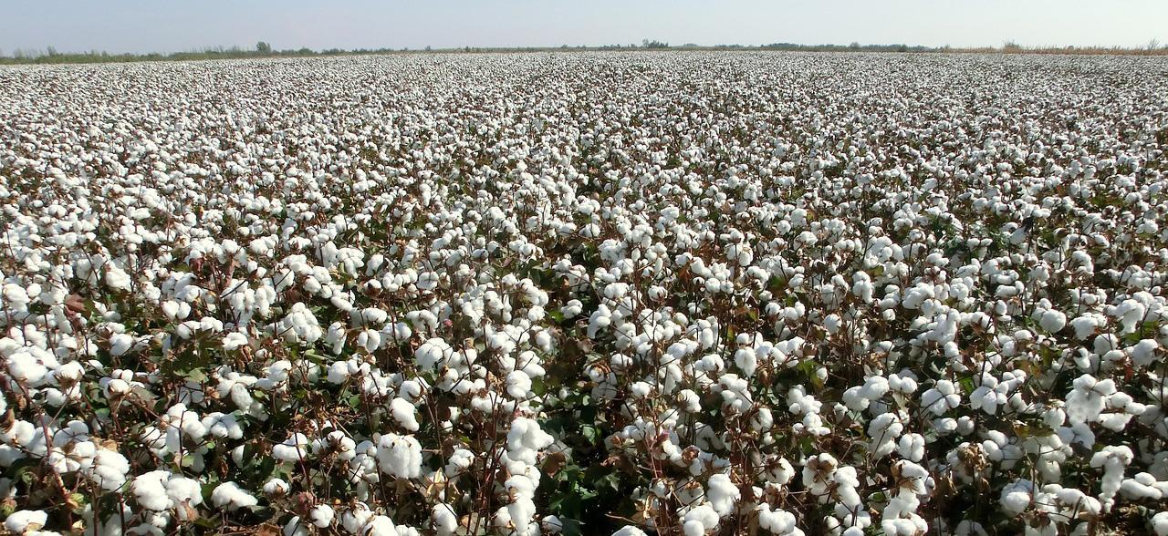 Технические товары из сельхозсырья в первой части октября все выросли