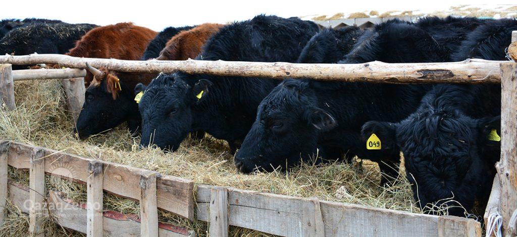 Казахстан стал крупнейшим поставщиком мяса в Узбекистан