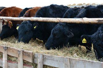 Даешь кредит на животноводство!