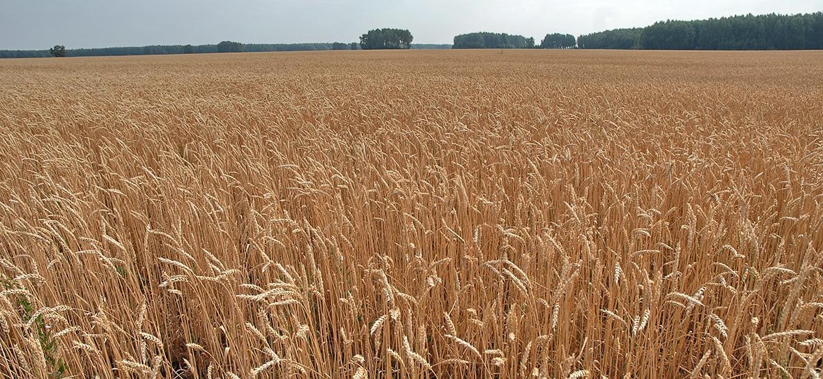 Март на рынке FOB для пшеницы из США, Франции и России закончился позитивом