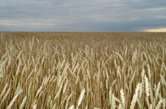 В этом году у крестьян выбор либо получить хороший урожай либо разориться