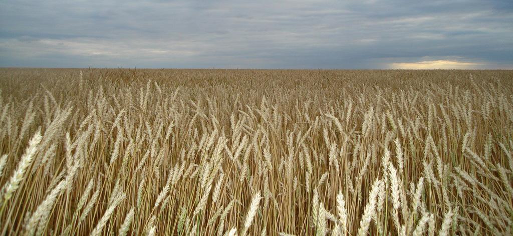 Минсельхозу Казахстана нужно ещё 100 млрд на импортозамещение