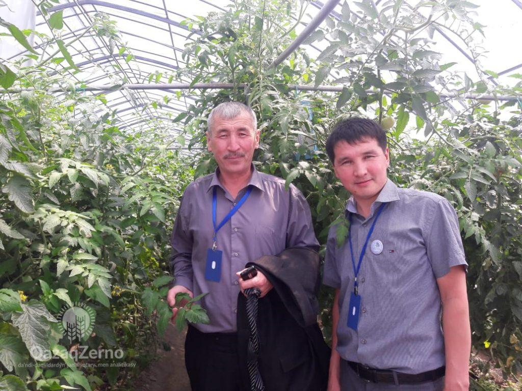 Овощеводство Казахстана требует модернизации