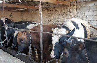 Казахстану необходима ветеринарная перестройка