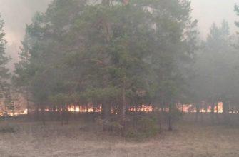 На Востоке сгорело 4 тысячи гектар соснового бора