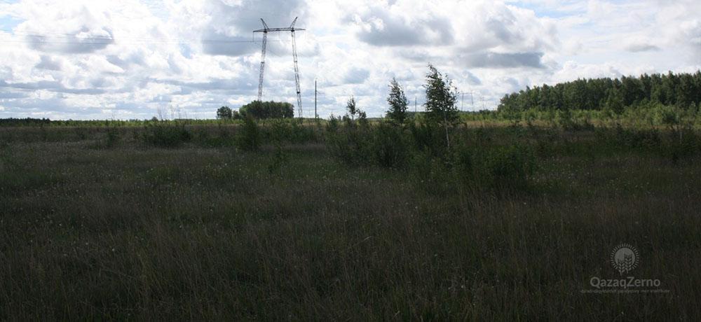 Сотни гектаров пашни зарастают сорняками и деревьями на Севере Казахстана