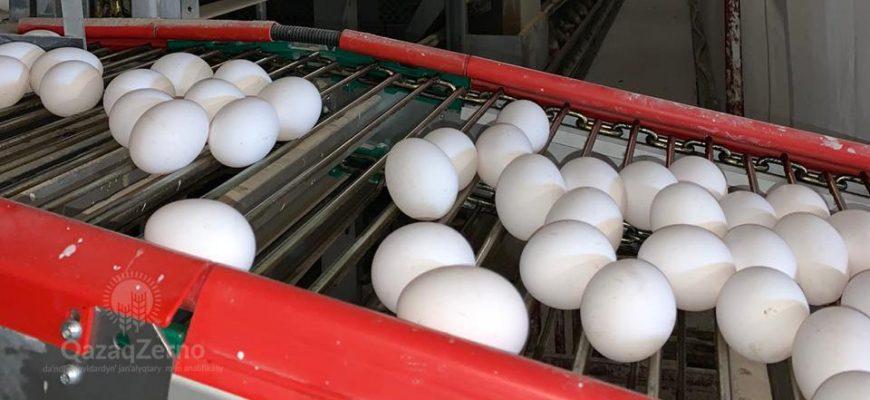 Чтоб местное яйцо не стало «золотым»