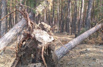 Апрельский ураган повалил свыше 39 тыс кубометров леса
