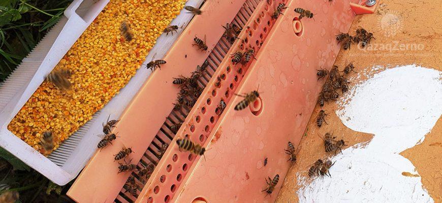Продукты пчеловодства против коронавируса