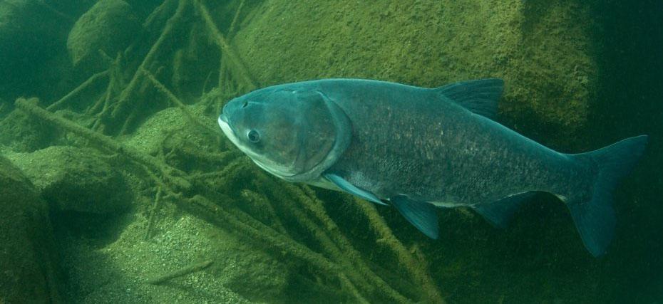 Чиновники Минэкологии лишают рыбную отрасль доходов