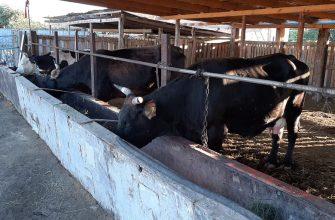 Семейная ферма – надежный тыл