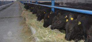 Крупное животноводческое предприятие приступило к работе в Жамбылской области