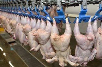 В Жамбылской области планируется разводить птицу на базе сельхозкооперативов