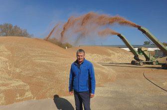 Цена зерна фермеров устраивает