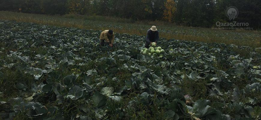 Сельхозкооперативы – движение без инерции