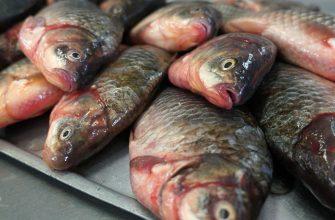 Рыбы мало, а рыбаков много