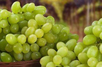 С донских виноградников собрали более 600 тонн янтарной ягоды