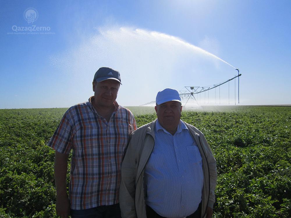 В Центральном Казахстане получают зерно высокого качества