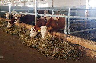 В Акмолинской области возросло поголовье КРС, овец и лошадей