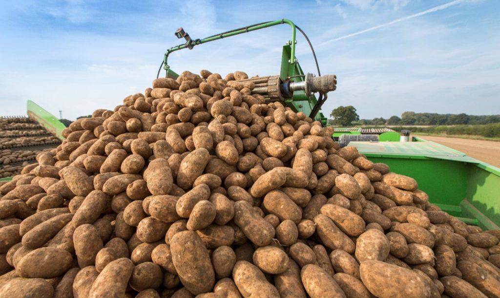 За прошлую неделю на ЕТС продали 4227 тонн пшеницы и 300 тонн картофеля