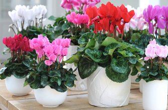 Цветочный бизнес может стать рентабельным