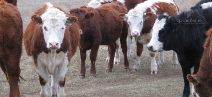 Сельчане Востока берут льготные кредиты на покупку скота