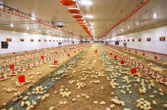 Макинская птицефабрика стала крупнейшей в Центральной Азии
