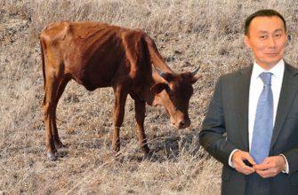 Как Мамытбеков сделал говядину предметом роскоши в Казахстане