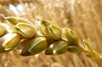 Минэкономразвития РФ разъяснил механизм плавающей экспортной пошлины на зерно